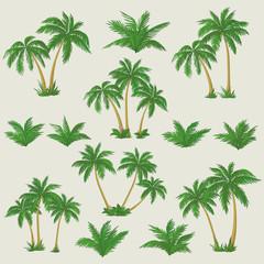 Tropical palm trees set