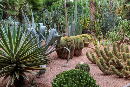 jardin tropical de Majorelle 1