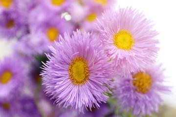 Beautiful wild flowers, close up
