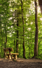 Bench in the Belgrade Forest