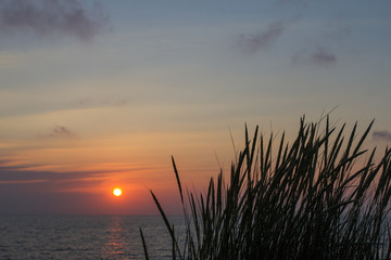 plants in the sundown at the shoreline in holland
