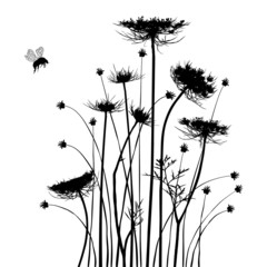 Collection for designers, meadow in summertime, plant vector