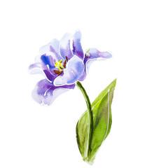 Purple tulips, watercolor painting.