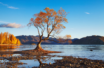 Fototapete - Lake Wanaka, New Zealand