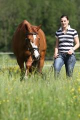 Spaziergang mit Pferd durch Wiese