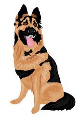 owczarek niemiecki,pies