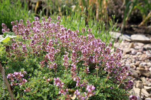 eco friendly wildlife garden essay