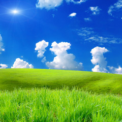 green grass on the field with sky