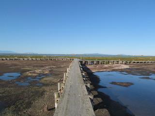 干潟と遊歩道