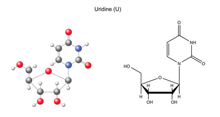 Structural chemical formula and model of uridine