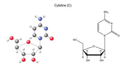 Structural chemical formula and model of cytidine