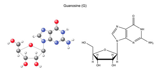 Structural chemical formula and model of guanosine