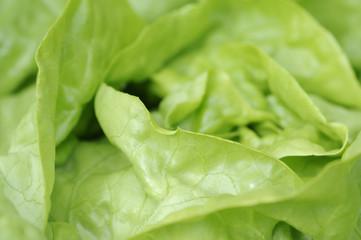 salat 40