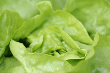 salat 42