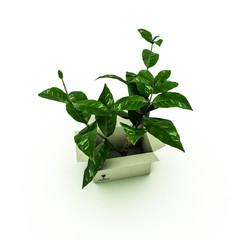 plant inside a box