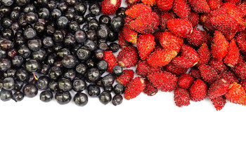 bilberry and wild strawberry on a white background