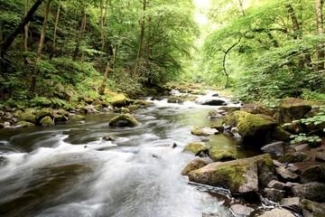 der Fluss Bode im Nationalpark Harz