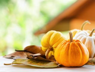 Pumpkins on rural landscape background