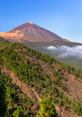 Teide volcano beyond a forest of pines in Tenerife, Spain