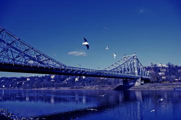 Möwen vorm blauen Wunder – Dresden