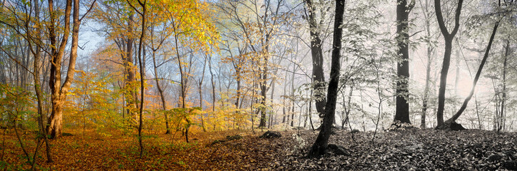 Beautiful morning scene in the forest,  panorama changing season