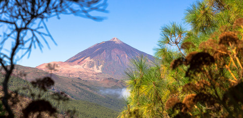 The Teide volcano behind branches, Tenerife