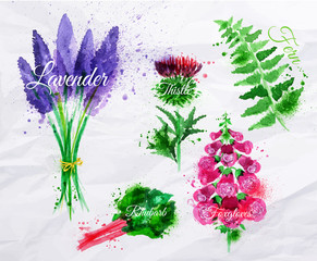Flower grass lavender, thistle, foxgloves, fern, rhubarb