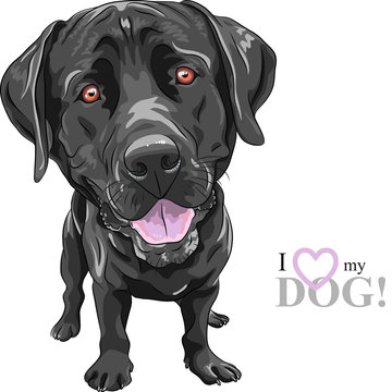 vector funny cartoon black dog breed Labrador Retriever
