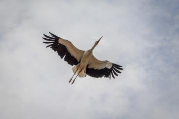 Le vol des cigognes du Bal des Oiseaux Fantômes du Puy du Fou