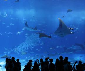aquarium window in Okinawa, Japan