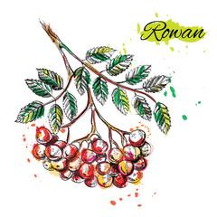 Art illustration of watercolor fruits. Vector EPS
