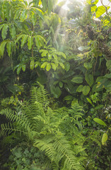 Fototapete - green tropical background rainforest