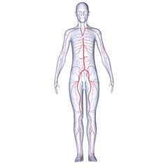 Body with Arteries