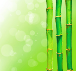 Bamboo sticks against blured background with bokeh