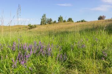 Graslandschaft in der Uckermark