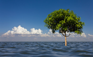 Mango tree growing in the middle of a lagoon sky as a backdrop