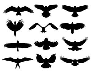 Black silhouettes of birds in flight, vector illustration