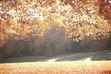 Dreamy image of beautiful Autumn forest