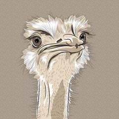 vector closeup portrait of funny Ostrich Bird