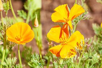 Orange flowers in sunlight