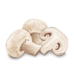 Champignon mushrooms isolated