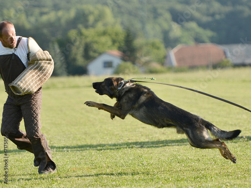 Chien De Garde Stock Photo And Royalty Free Images On