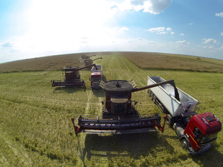 Combine harvesters on colza field. Aerial view