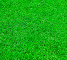 Fresh green grass texture