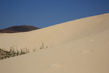 dunes de l'île de fuerteventura