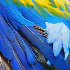 Wall Mural - Scarlet Macaw feathers