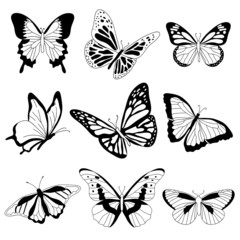 Vector butterflies on white background