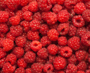 many red succulent raspberries backgrounds