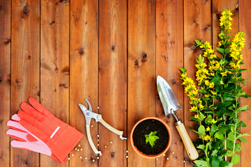 Copyspace frame with gardening tools on old wooden background
