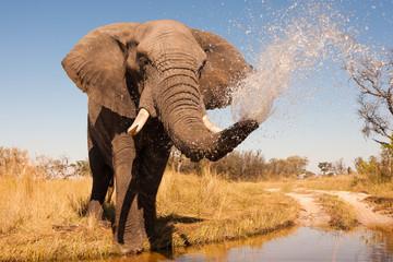 Poster Afrika Elephant
